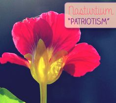 Nasturtium: Patriotism | The Language of Flowers at DisneyBaby.com - Check out all 20 flowers & their meanings!