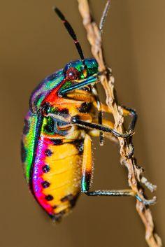Galería | Diminutos y exóticos National Geographic en Español: Los tonos metálicos dominan en la coraza de algunos insectos.  Foto: Shutterstock.