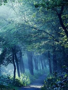 Blue path in the forest