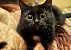 Wide-eyed kitty I'm sooooooooooooooo cute :P