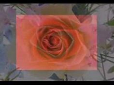 KALHMERA - YouTube The Creator, Rose, Flowers, Youtube, Pink, Roses, Royal Icing Flowers, Flower, Youtubers
