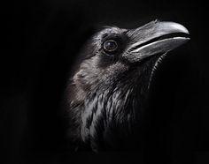 Spirit of Raven