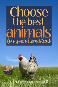 When you are first starting out, homesteading can be so overwhelming. From what to grow in your garden to what animals to raise. Knowing the choices that are out there will help you to better choose the best fit for you and your family. Raising Rabbits For Meat, Raising Farm Animals, Meat Rabbits, Raising Goats, Backyard Ducks, Chickens Backyard, Backyard Beekeeping, Urban Chickens, Urban Homesteading