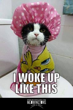 Funny animal pictures of the day 25 pics cat cats kitty meow kitten kittens cutecats animal animals pet cute aww a adorable Cute Funny Animals, Funny Animal Pictures, Funny Cats, Cats Humor, Funny Pictures Of Babies, Fun Funny, Lol Pictures, Funny Cat Pics, Pigs