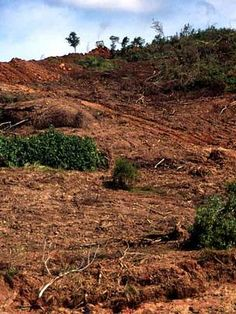 Industrial machinery has caused this damage. Balikpapan, Kalimantan Timur, Kalimantan (Borneo), ... / ©: Tantyo Bangun / WWF