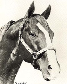 Go Man Go, winningest Quarterhorse to race in US  (we used to have a gelding descended from this one...he was a beauty...RIP Rev...