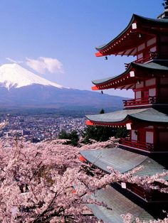 Cherry Blossoms and ....