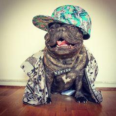 Hipster Style Boss, Babian, the French Bulldog