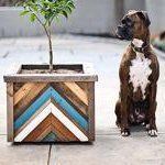 10 DIY Painted Planter Ideas   Apartment Therapy