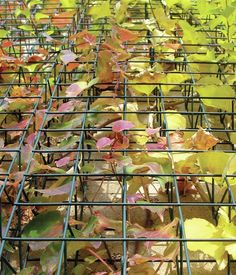 """greenscreen's modular, welded-wire trellis system allows climbing plants to become green sculpture. Best of all, Migeon says, whether assembled as a fence, a column, or a more complex shape, """"once you have some wisteria over it, it disappears."""" greenscreen, greenscreen.com"""