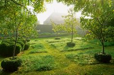 Contemporary Designers' Guiness orchard by Robin Baker   boxwood donuts at base of fruit trees
