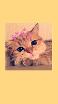 Hintergrund My fav cutieee animals cat wallpaper cutieee fav Hintergrund Cute Baby Cats, Cute Baby Animals, Kittens Cutest, Funny Animals, Funny Cats, Cute Cat Wallpaper, Animal Wallpaper, Disney Wallpaper, Iphone Wallpaper