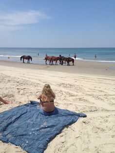Corolla Wild Horses on the Outer Banks of NC. It would be so cool to be sitting on the beach with wild horses right in front of you!