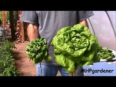 Final Results - Hydroponic Fertilizer Experiment - YouTube