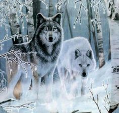 Which wolf are you.or the confident wolf who leads the hunt? Wolf Pictures, Animal Pictures, Indian Pictures, Beautiful Creatures, Animals Beautiful, Animals And Pets, Cute Animals, Wolf Husky, Wolf Spirit Animal