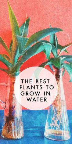 best plants to grow in water