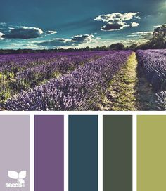 Color Inspiration – Purple, Green and Teal – Addicted 2 Decorating® purple and green inspiration palette Colour Pallette, Color Palate, Colour Schemes, Color Patterns, Color Combos, Green Palette, Color Trends, Website Color Palette, Neutral Palette