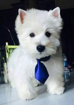 Adorable! Palmer with his first hair cut, the tie is cracking me up.... from a FB account