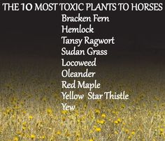 10 Most Toxic Plants To Horses