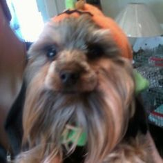 Lewie is a contestant for True Chews Dog of the Week!