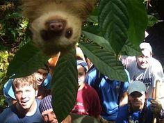 The magical slothobomb