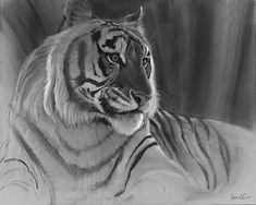 Gallery of Animal Art by animation legend and wildlife artist Aaron Blaise. A collection of Drawings, Paintings, Digital Art, Illustrations, and Sketches