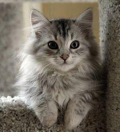 Fluffy grey!