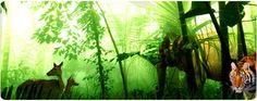 Camping, Rafting, Wild Life Safari >>>#Camping #rafting #WildLifeSafari