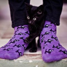 Purple socks and a black kitten, what could be better? -- I don't know, are we approaching Crazy Cat Lady territory here? Cute Cats, Funny Cats, Funny Animals, Cute Animals, Funny Animal Photos, Animal Pictures, Crazy Cat Lady, Crazy Cats, Gatos Cats