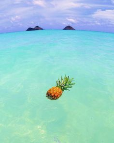 summer sun, summer of love, summer beach, Pineapple Wallpaper, Pineapple Art, Pineapple Pictures, Baby Pineapple, Summer Pictures, Pretty Pictures, Holiday Pictures, New Beginning Symbol, Cute Wallpapers
