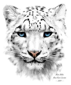 Formskiftare. En snöleopard