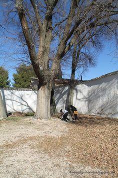 Patio de la casa de Dulcinea. El Toboso(Toledo)