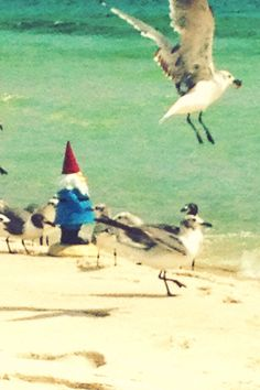 Travelocity Gnome feeding the seagulls! ;-) (iPhone)