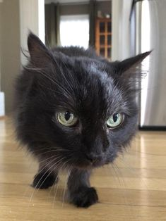 Shes 17 years old and starting to go grey! by keegrunk cats kitten catsonweb cute adorable funny sleepy animals nature kitty cutie ca