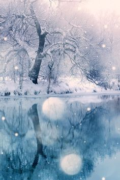 ♥⊱ Winter wonderland ⊰♥