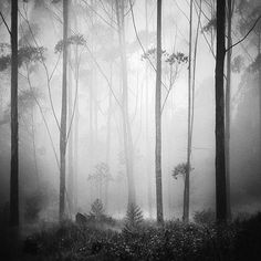 Forest Dream by Hengki  Gorgeous, misty, dream-like and peaceful. Gotta say right now I need peaceful :)
