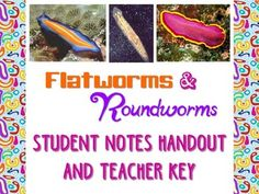 Y13-page student fill-in style notes sheet and 13-page teacher key (in both .docx and .pdf format).The Flatworm and Roundworm Notes Handouts covers the following topics and more:What is a Flatworm?Flatworm Body Systems ClassificationParasitismClass Turbellaria- characteristics and examplesClass Cestoda- characteristics and examplesClass Trematoda- characteristics and examplesClass Monogenea- characteristics and examplesWhat is a Roundworm?Roundworm Body SystemsAbundanc...