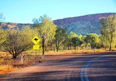 OUTBACK AUSTRALIANO! Já estamos em Alice Springs a porta de entrada para a nossa road trip pelo deserto australiano.  Hoje conhecemos o parque Alice Springs Desert Park. No meio do deserto o parque abriga diferentes ecossistemas australianos como: Desert Rivers Sand Country e Woodland.  Ao longo de uma caminhada fácil de 3 km passamos por áreas destinadas a animais da região como cangurus dingo aves roedores e répteis.  Este é um ótimo passeio para se fazer antes de iniciar a sua viagem pelo…