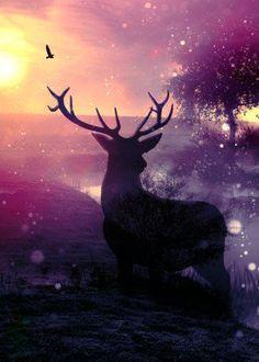 morning sunrise mist daybreak deer eagle birds tree fantasy colours buck wildlife animals cool rise