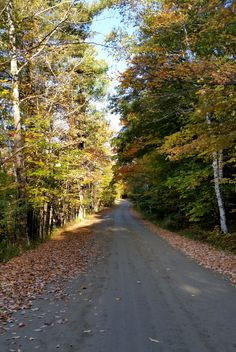 The windy foliage covered road to 360° mountain views surrounding #TrappFamilyLodge.
