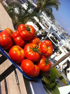 Milas'ın köylerinden yerli tohum domateslerin zamanı, bu muhteşem ürünleri doya doya kullanıyoruz.