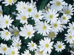 White Flowers Can Light Up Your Garden At Night! --> http://www.hgtvgardens.com/white-flowers-and-plants-ideas?soc=pinterest