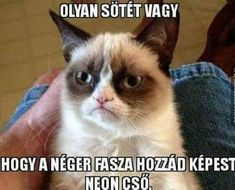 Take the elegant funny sillly grumpy cat memes - hilarious pets pictures