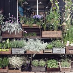 Herb Gardens in Baskets, Crates, and Tins.