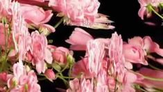 GIOVANNI MARRADI - Romantico  FOR YOU DEAR CHRISTINA....... LOVE ALWAYS GINO, A 1000 HUGS AND KISS