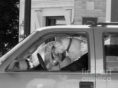"""Family Drive"" -- Black and white street photography    (Photo by Lin Haring)"