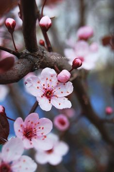 23474 best flowers beautiful images on pinterest in 2018 23474 best flowers beautiful images on pinterest in 2018 beautiful flowers planting flowers and wonderful flowers mightylinksfo