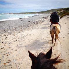 Exploring Tasmania's King Island on a horse beck. Have A Great Vacation, Great Vacations, Tasmania Travel, Beach Trip, Beach Travel, Kings Island, Australia Travel, Beautiful Beaches, Vacation Spots