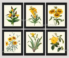 Botanical Print Set of 6 Antique Beautiful Redoute Flowers Yellow Lady's Slipper Blanket Flower Wall Flower Coreopsis Iris Rose Daisy Nature Plants Home Room Decor Wall Art Unframed. Beautiful set of 6 prints based on antique botanical illustrations from 1887. Wonderful details, colors and natural history feel. • The prints measure 4x6, 5x7, or 8x10 inch. based on your selection and come with a white border for easy framing. • Printed on professional artist archival matte paper. • The…