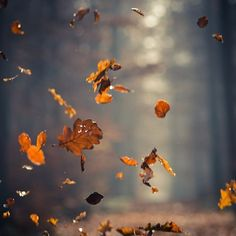 Falling leaves Falling leaves The post Falling leaves appeared first on Fotografie. Housewarming Party, Leaf Photography, Amazing Photography, Autumn Trees, Autumn Leaves, Fall Wallpaper Tumblr, Halloween Fotografie, Fall Leaves Tattoo, Cool Pictures